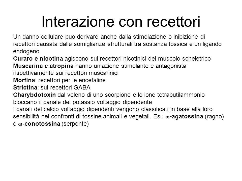 Interazione con recettori Un danno cellulare può derivare anche dalla stimolazione o inibizione di recettori causata dalle somiglianze strutturali tra sostanza tossica e un ligando endogeno.