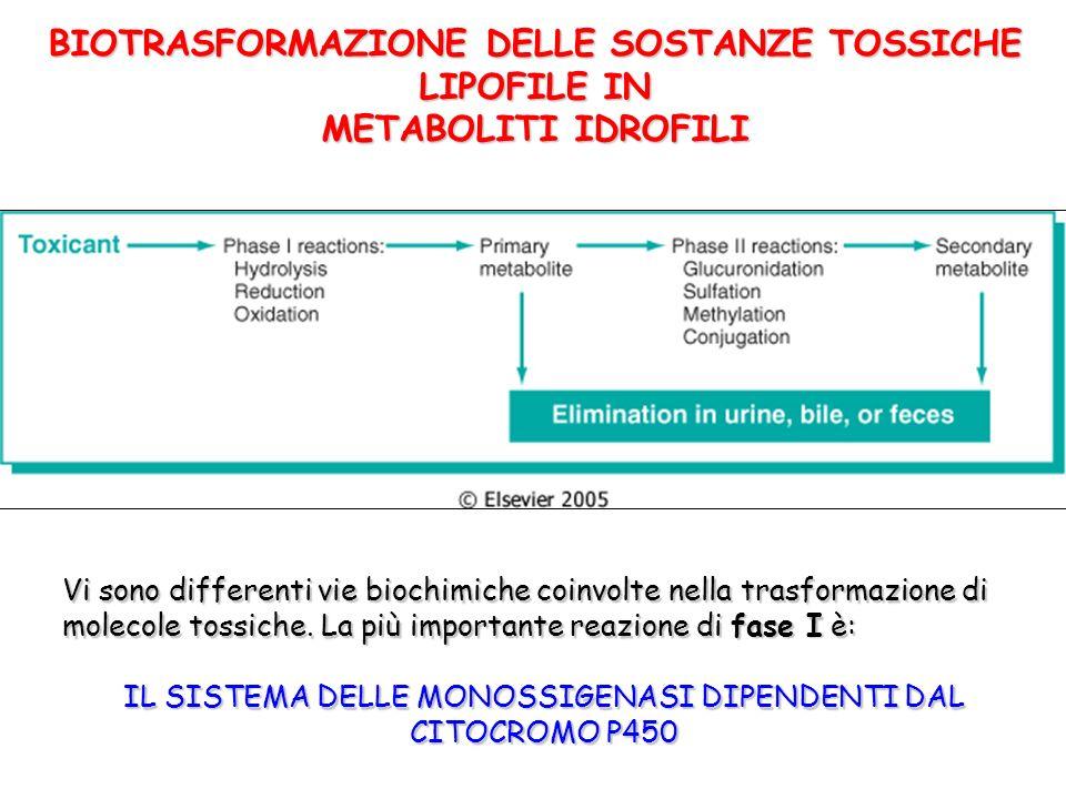 BIOTRASFORMAZIONE DELLE SOSTANZE TOSSICHE LIPOFILE IN METABOLITI IDROFILI Vi sono differenti vie biochimiche coinvolte nella trasformazione di molecole tossiche.