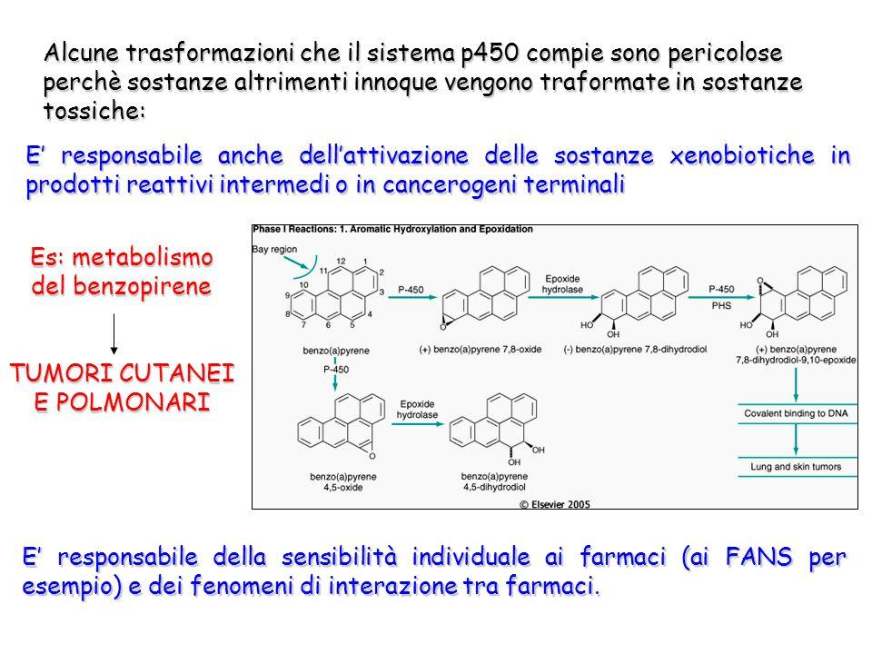 SOSTANZE STIMOLANTI i P450: - CAFFEINA - ALCOL - DIOSSINA - INQUINANTI AMBIENTALI - DIETE IPERPROTEICHE - PESTICIDI - FARMACI SOSTANZE RALLENTANTI i P450: - MONOSSIDO di CARBONIO - BARBITURICI - QUERCETINA - ECCESSO di TOSSICI - CARENZA di ENZIMI - CARENZA di NUTRIENTI - MANCANZA di OSSIGENO Tutte queste sostanze possono causare danni alla funzionalità epatica e sintomi da sovraccarico tossico