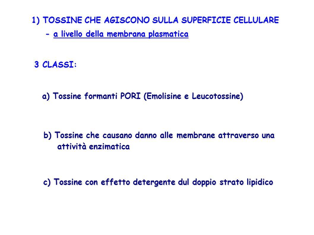 1) TOSSINE CHE AGISCONO SULLA SUPERFICIE CELLULARE - a livello della membrana plasmatica - a livello della membrana plasmatica 3 CLASSI: a) Tossine fo
