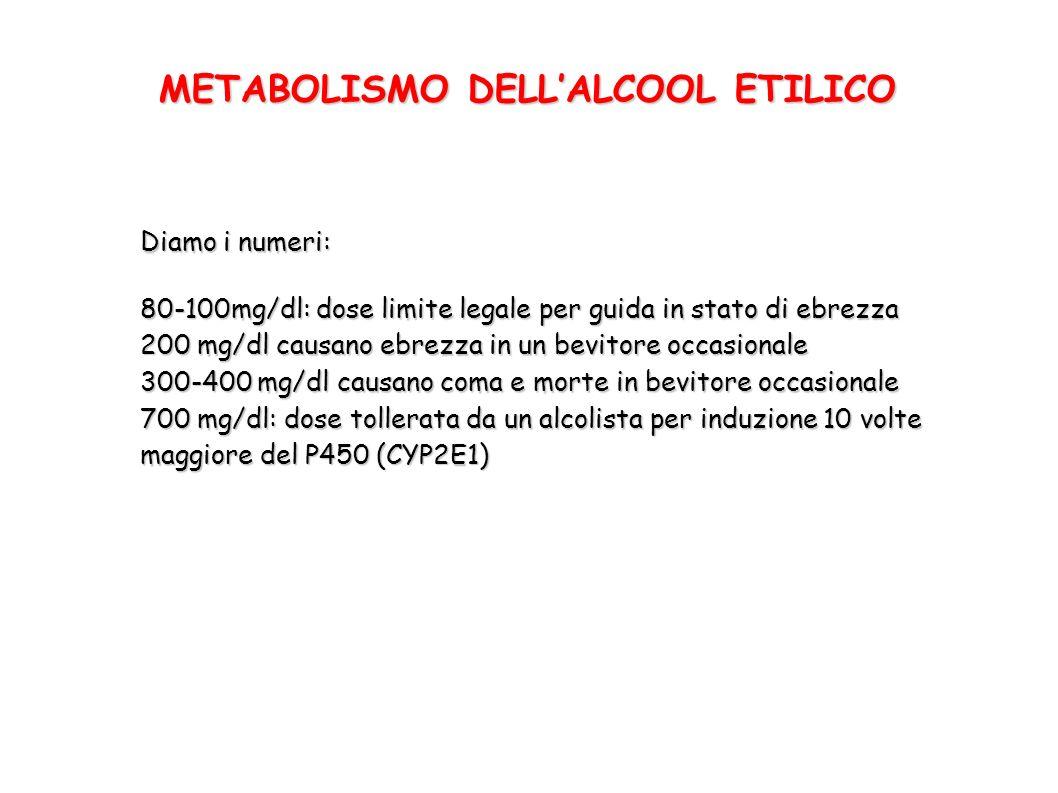 METABOLISMO DELLALCOOL ETILICO Diamo i numeri: 80-100mg/dl: dose limite legale per guida in stato di ebrezza 200 mg/dl causano ebrezza in un bevitore