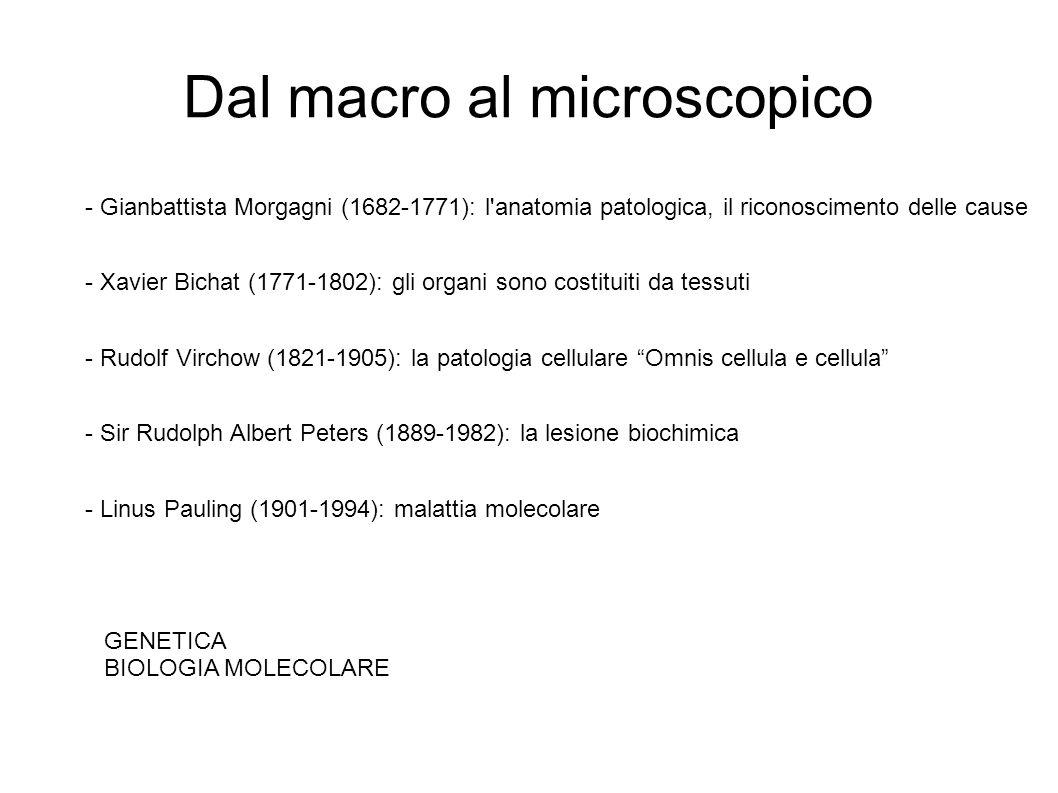 Dal macro al microscopico - Gianbattista Morgagni (1682-1771): l'anatomia patologica, il riconoscimento delle cause - Xavier Bichat (1771-1802): gli o
