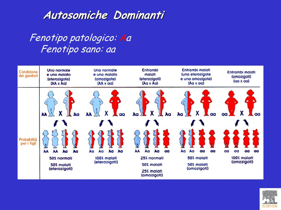 Autosomiche Dominanti Fenotipo patologico: Aa Fenotipo sano: aa