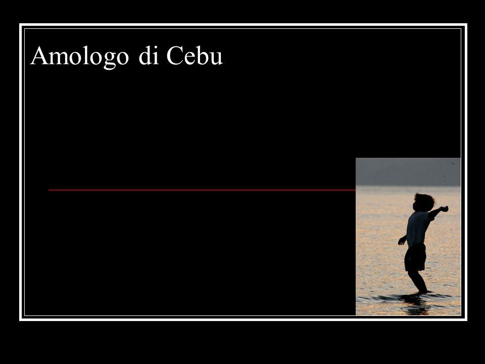 Amologo di Cebu