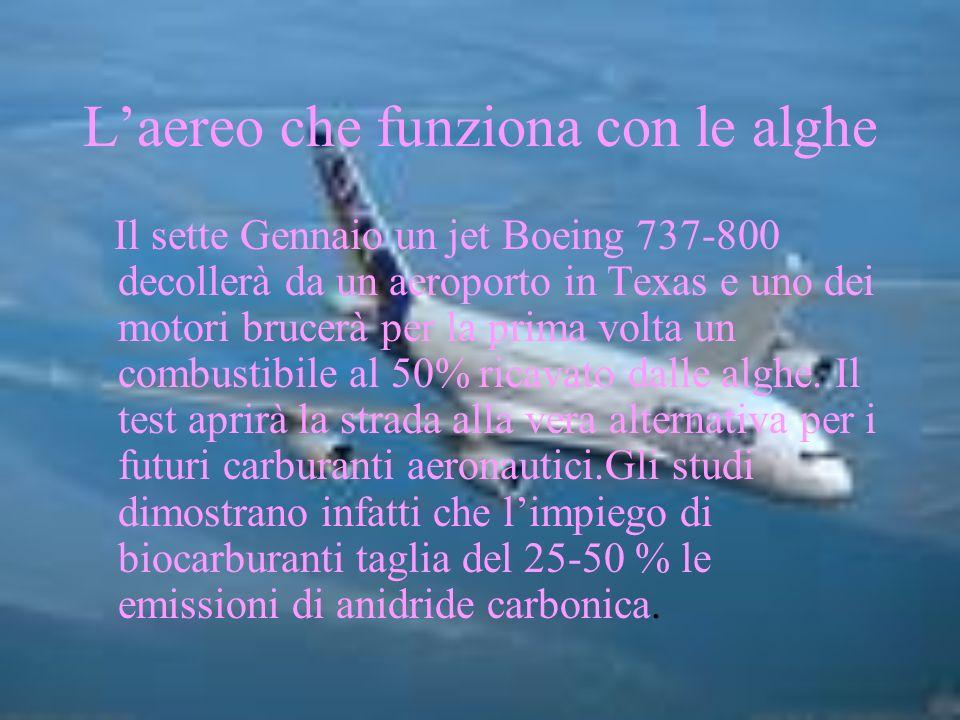 Laereo che funziona con le alghe Il sette Gennaio un jet Boeing 737-800 decollerà da un aeroporto in Texas e uno dei motori brucerà per la prima volta