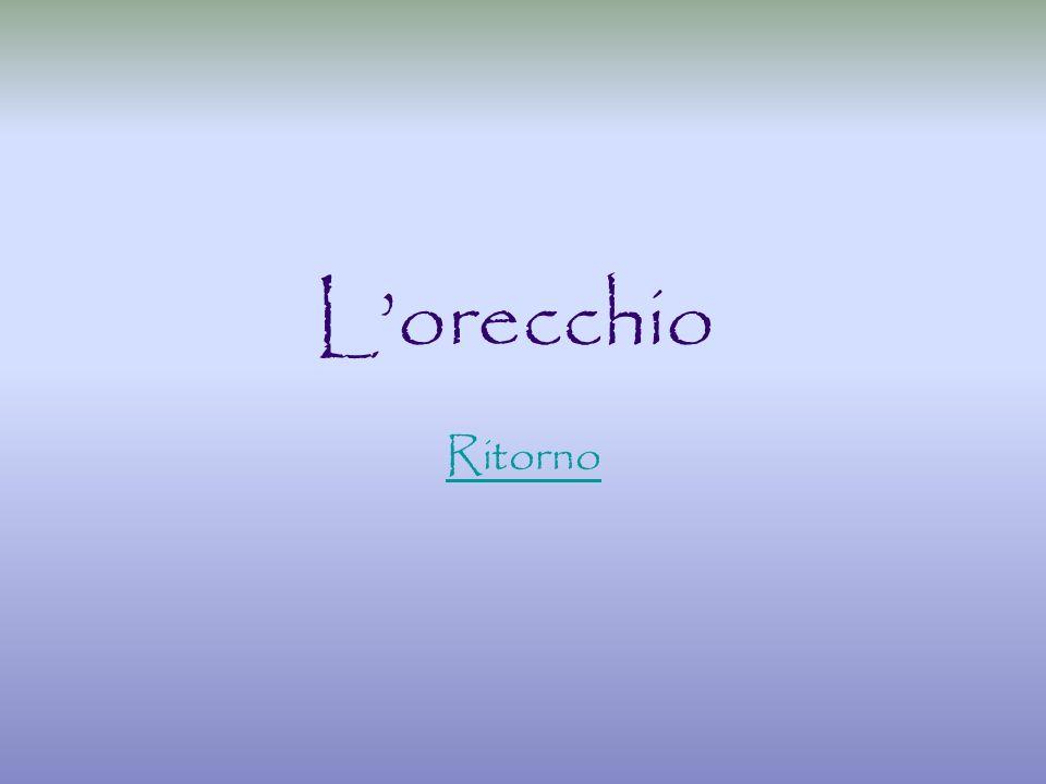 Lorecchio Ritorno