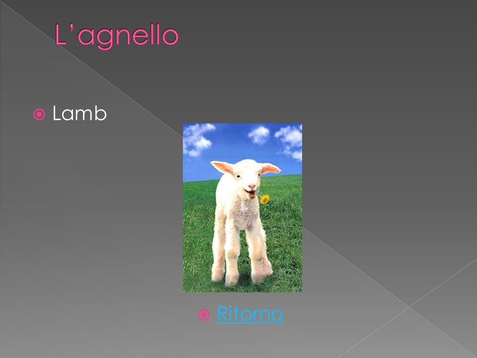 Lamb Ritorno