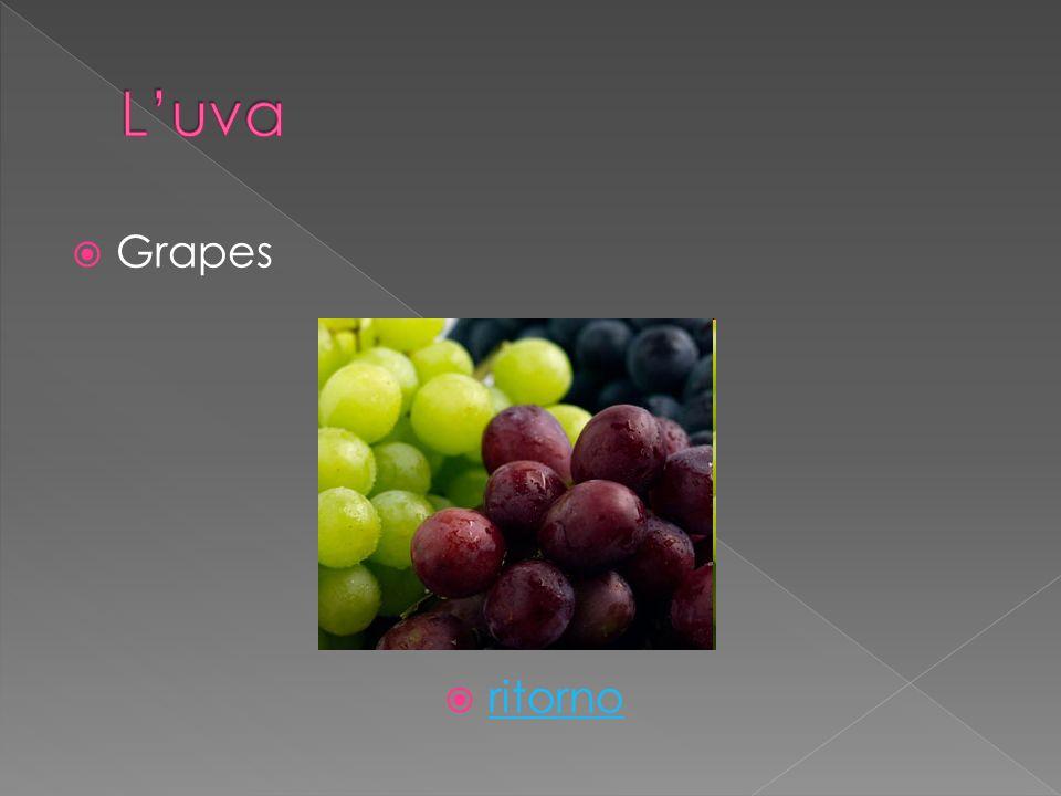 Grapes ritorno