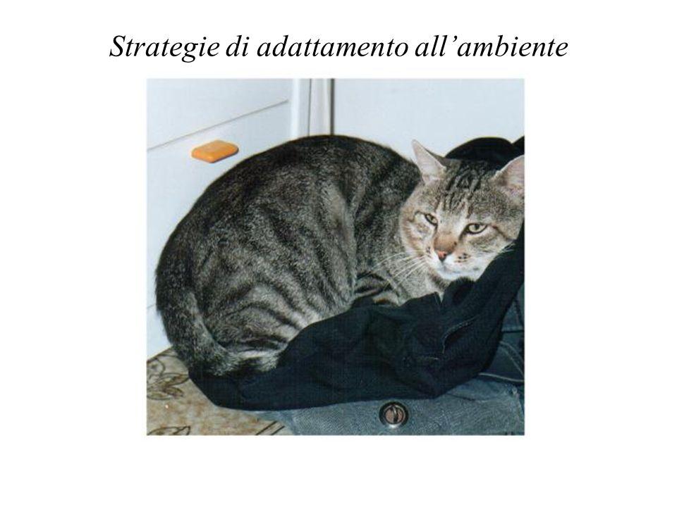 Strategie di adattamento allambiente