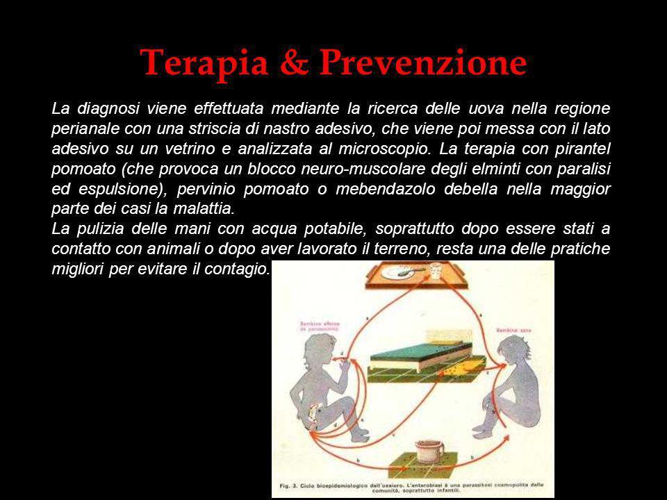 Terapia & Prevenzione La diagnosi viene effettuata mediante la ricerca delle uova nella regione perianale con una striscia di nastro adesivo, che vien