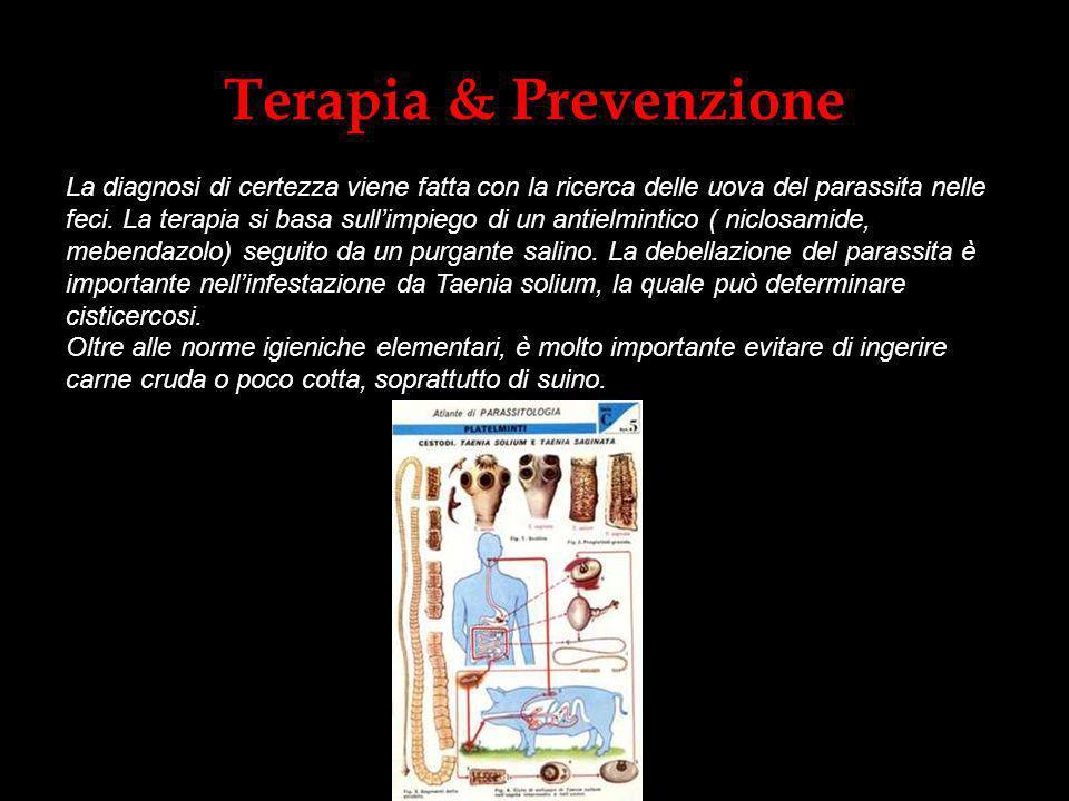Terapia & Prevenzione La diagnosi di certezza viene fatta con la ricerca delle uova del parassita nelle feci. La terapia si basa sullimpiego di un ant