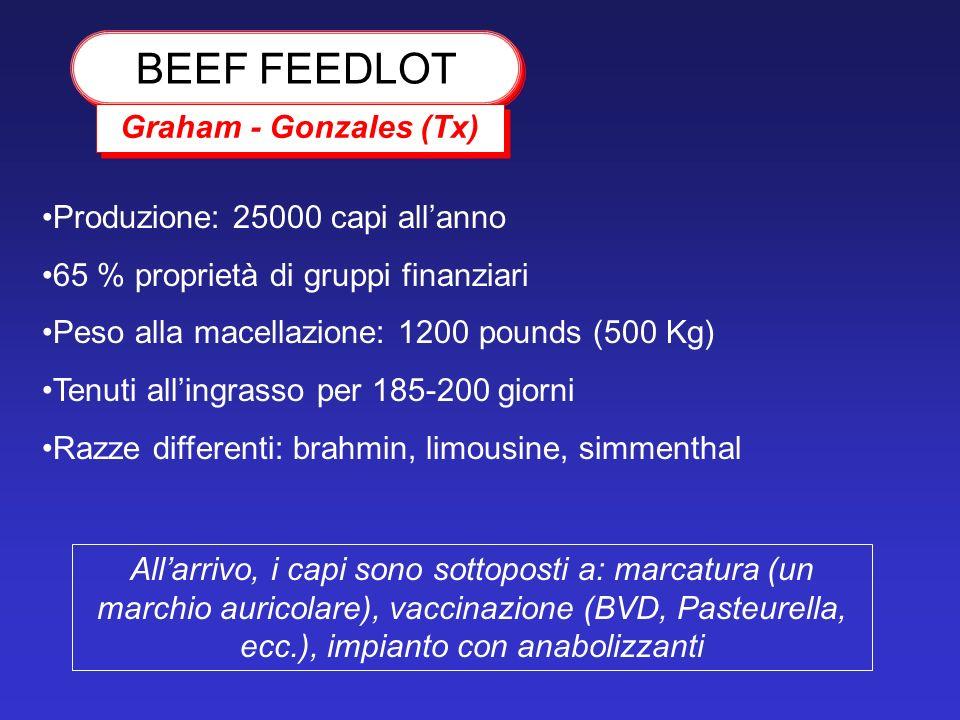 BEEF FEEDLOT Graham - Gonzales (Tx) Produzione: 25000 capi allanno 65 % proprietà di gruppi finanziari Peso alla macellazione: 1200 pounds (500 Kg) Te