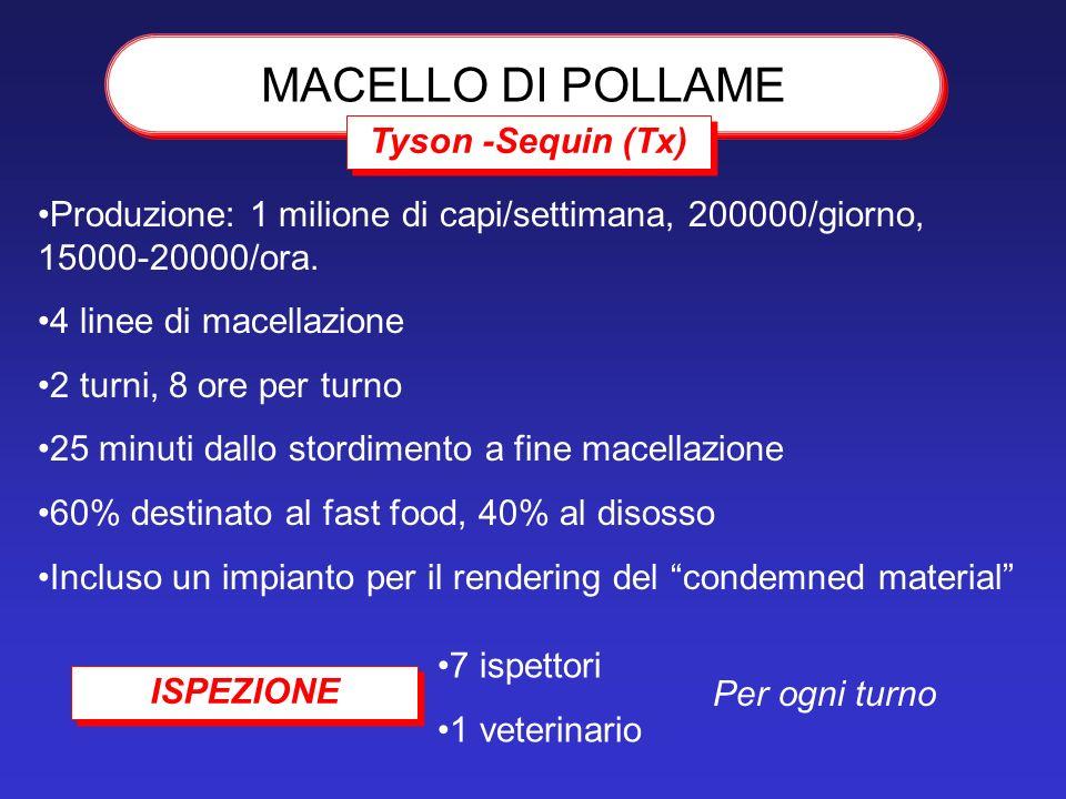 MACELLO DI POLLAME Tyson -Sequin (Tx) Produzione: 1 milione di capi/settimana, 200000/giorno, 15000-20000/ora. 4 linee di macellazione 2 turni, 8 ore