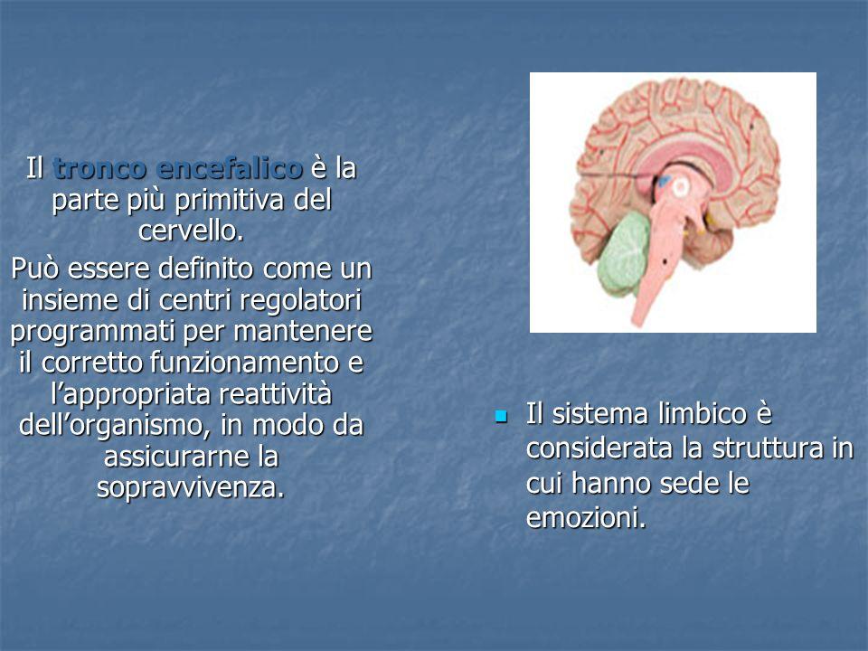 Il sistema limbico è considerata la struttura in cui hanno sede le emozioni.