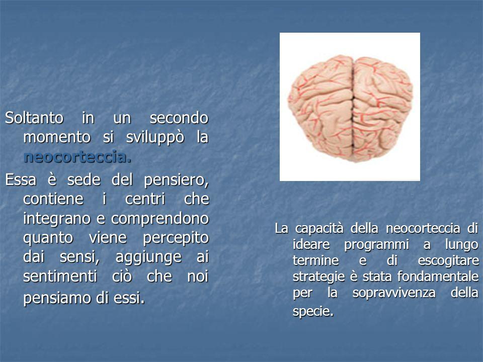 Soltanto in un secondo momento si sviluppò la neocorteccia.