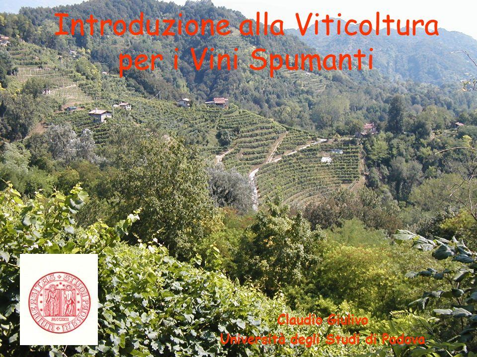 Introduzione alla Viticoltura per i Vini Spumanti Claudio Giulivo Università degli Studi di Padova