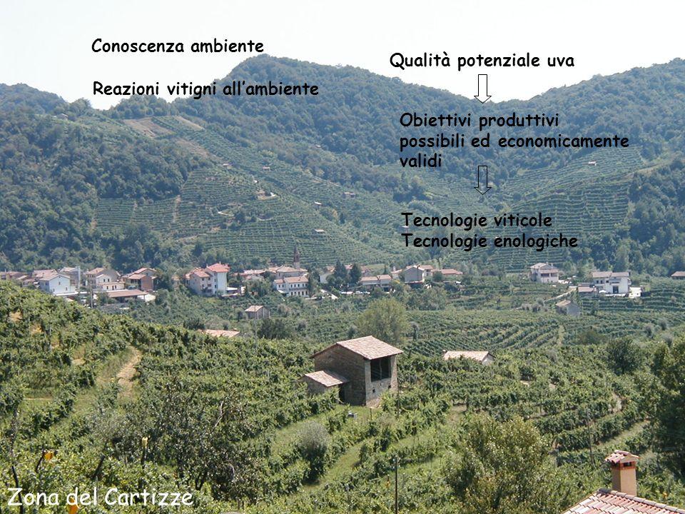 Zona del Cartizze Conoscenza ambiente Reazioni vitigni allambiente Qualità potenziale uva Obiettivi produttivi possibili ed economicamente validi Tecnologie viticole Tecnologie enologiche
