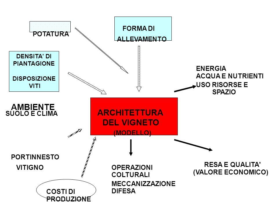 ARCHITETTURA DEL VIGNETO (MODELLO) FORMA DI VITIGNO PORTINNESTO COSTI DI PRODUZIONE OPERAZIONI COLTURALI USO RISORSE E SPAZIO RESA E QUALITA (VALORE ECONOMICO) ALLEVAMENTO POTATURA MECCANIZZAZIONE DIFESA AMBIENTE SUOLO E CLIMA ENERGIA ACQUA E NUTRIENTI DENSITA DI PIANTAGIONE DISPOSIZIONE VITI