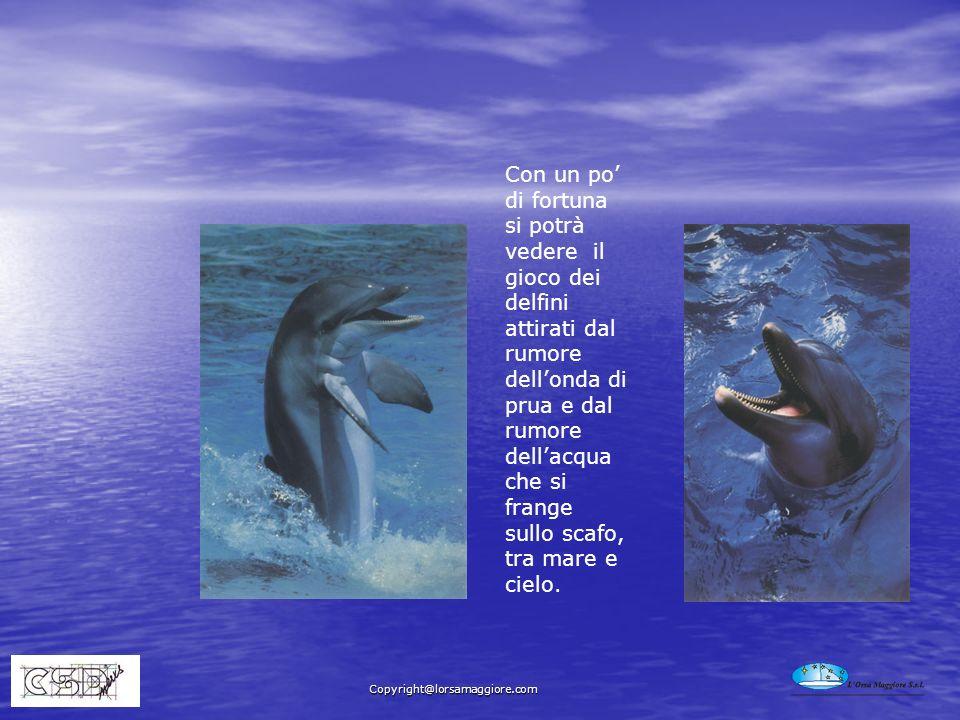 Con un po di fortuna si potrà vedere il gioco dei delfini attirati dal rumore dellonda di prua e dal rumore dellacqua che si frange sullo scafo, tra m