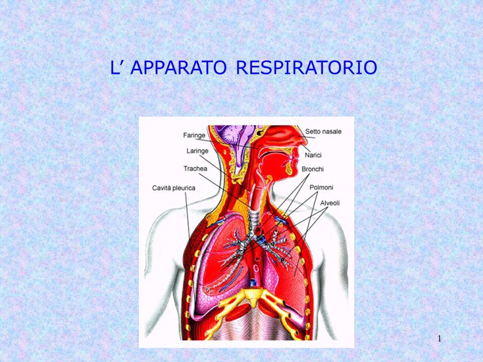 Classe 5 A - Sara Gotti1 L APPARATO RESPIRATORIO