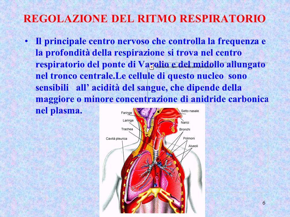 Classe 5 A - Sara Gotti5 Gli scambi respiratori avvengono a livello delle pareti degli alveoli polmonari costituite da cellule coperte da un sottile v