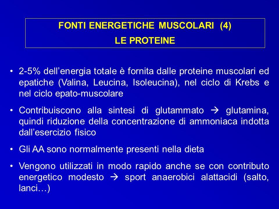 FONTI ENERGETICHE MUSCOLARI (4) LE PROTEINE 2-5% dellenergia totale è fornita dalle proteine muscolari ed epatiche (Valina, Leucina, Isoleucina), nel