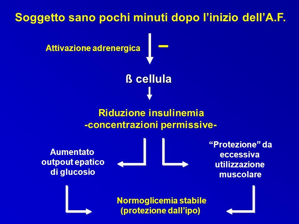 Soggetto sano pochi minuti dopo linizio dellA.F. Attivazione adrenergica ß cellula Riduzione insulinemia -concentrazioni permissive- Aumentato outpout