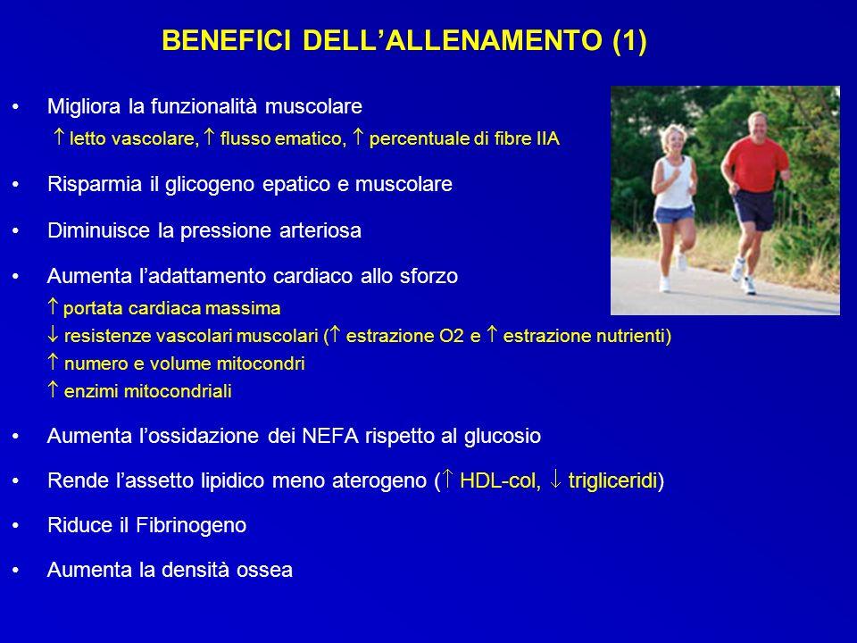 BENEFICI DELLALLENAMENTO (1) Migliora la funzionalità muscolare letto vascolare, flusso ematico, percentuale di fibre IIA Risparmia il glicogeno epati