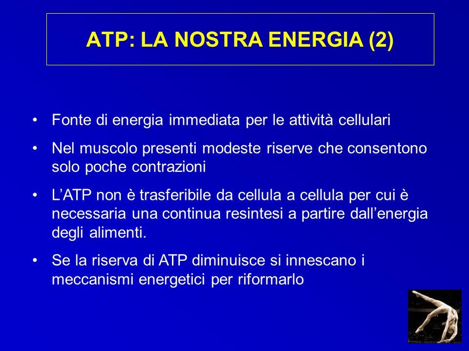 ATP: LA NOSTRA ENERGIA (2) Fonte di energia immediata per le attività cellulari Nel muscolo presenti modeste riserve che consentono solo poche contraz
