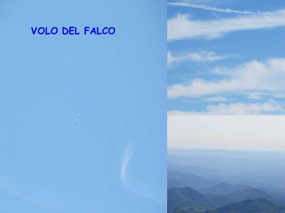 VOLO DEL FALCO