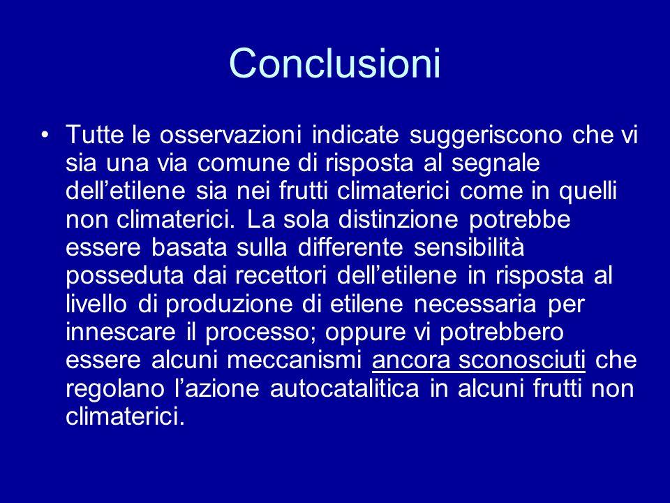 Conclusioni Tutte le osservazioni indicate suggeriscono che vi sia una via comune di risposta al segnale delletilene sia nei frutti climaterici come in quelli non climaterici.