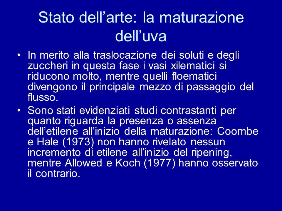 Stato dellarte: la maturazione delluva Chervin et al.(2004), molto più di recente, hanno però confermato la presenza di etilene allinizio della maturazione delluva in pianta madre ed, in particolare, questo è accumulato come MACC nei vacuoli.