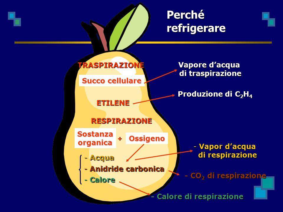 TRASPIRAZIONE RESPIRAZIONE Succo cellulare Vapore dacqua di traspirazione Sostanzaorganica Ossigeno - Acqua - Anidride carbonica - Calore + - Calore di respirazione - CO 2 di respirazione - Vapor dacqua di respirazione di respirazione Perché refrigerare ETILENE Produzione di C 2 H 4