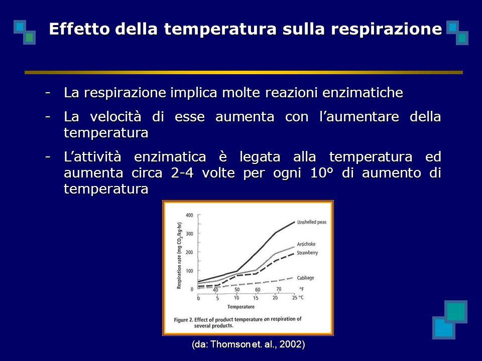 -La respirazione implica molte reazioni enzimatiche -La velocità di esse aumenta con laumentare della temperatura -Lattività enzimatica è legata alla temperatura ed aumenta circa 2-4 volte per ogni 10° di aumento di temperatura Effetto della temperatura sulla respirazione (da: Thomson et.