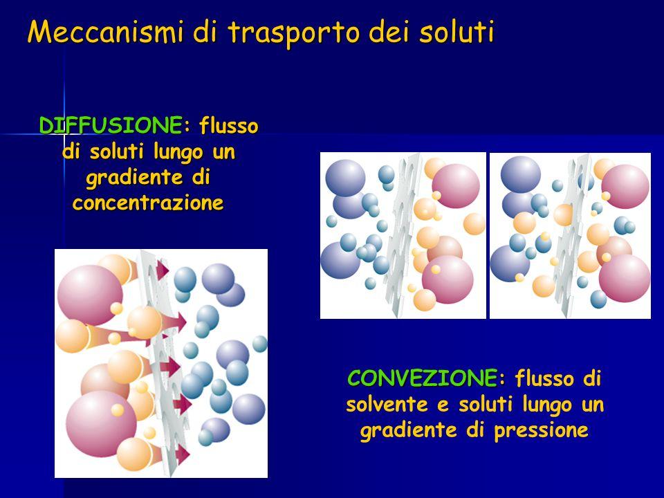 DIFFUSIONE: flusso di soluti lungo un gradiente di concentrazione CONVEZIONE: CONVEZIONE: flusso di solvente e soluti lungo un gradiente di pressione