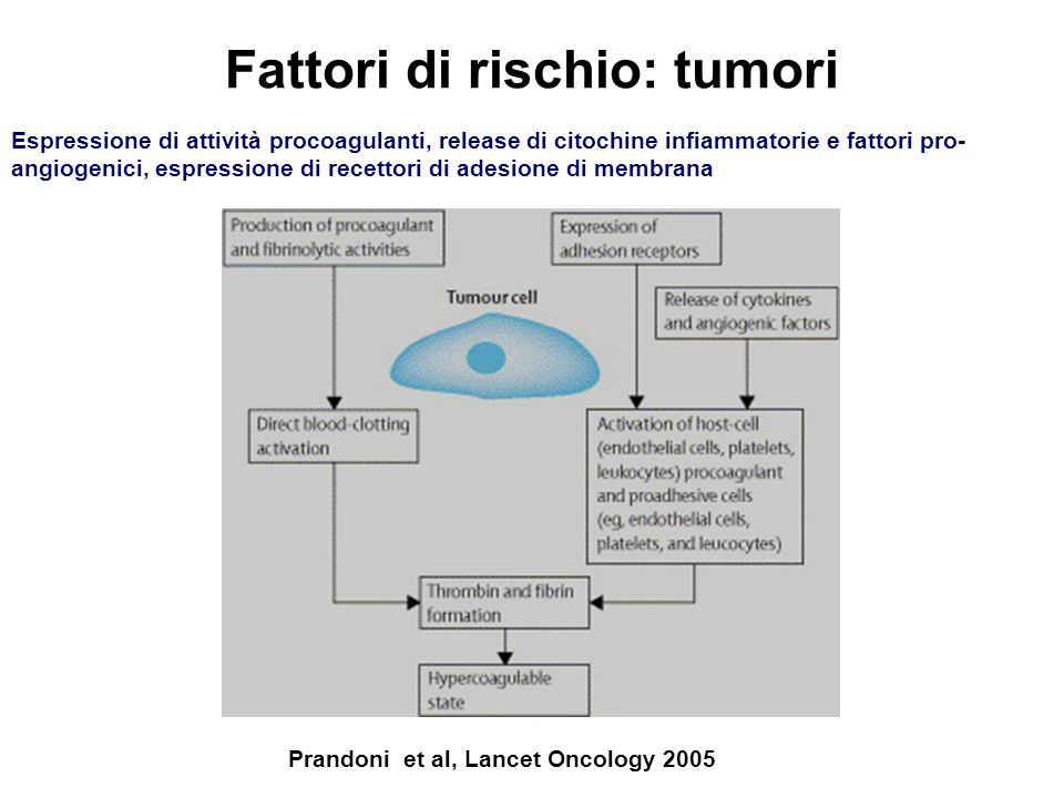 Prandoni et al, Lancet Oncology 2005 Espressione di attività procoagulanti, release di citochine infiammatorie e fattori pro- angiogenici, espressione