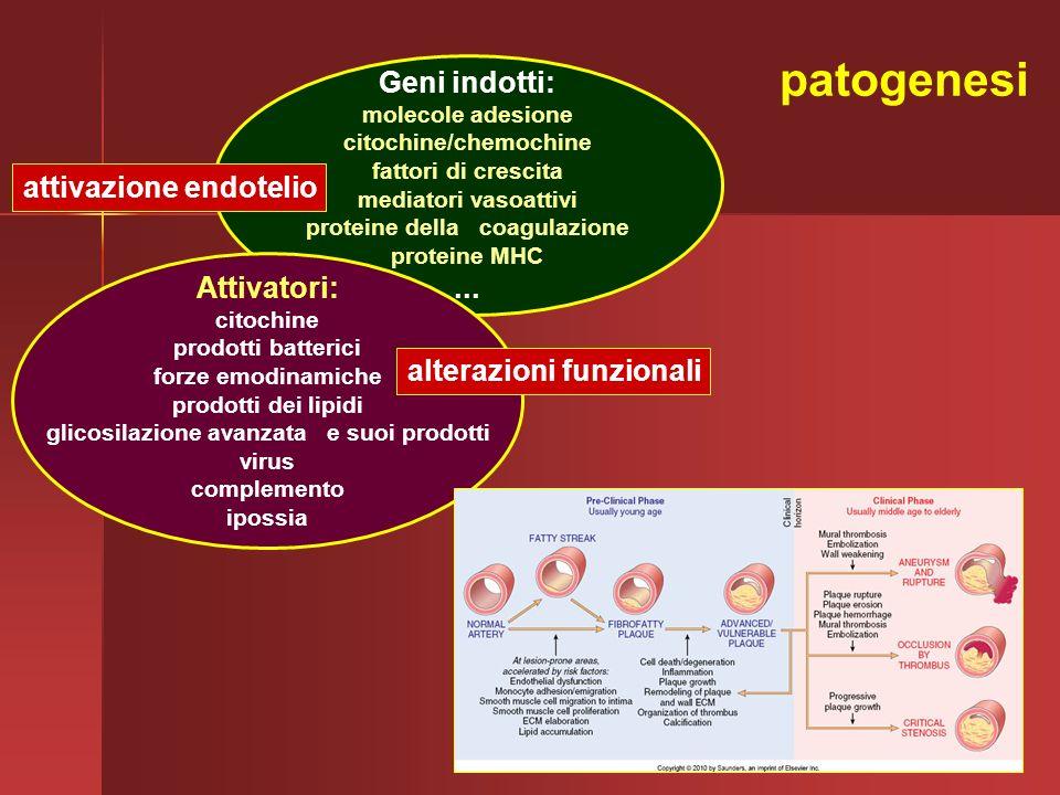 Geni indotti: molecole adesione citochine/chemochine fattori di crescita mediatori vasoattivi proteine della coagulazione proteine MHC... Attivatori: