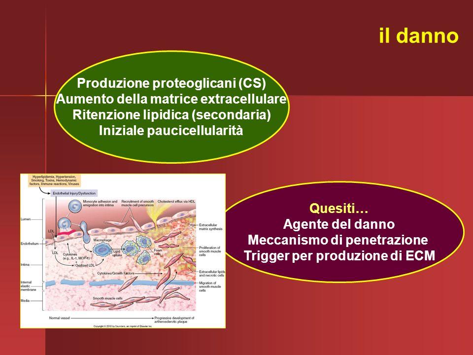 Produzione proteoglicani (CS) Aumento della matrice extracellulare Ritenzione lipidica (secondaria) Iniziale paucicellularità Quesiti… Agente del dann