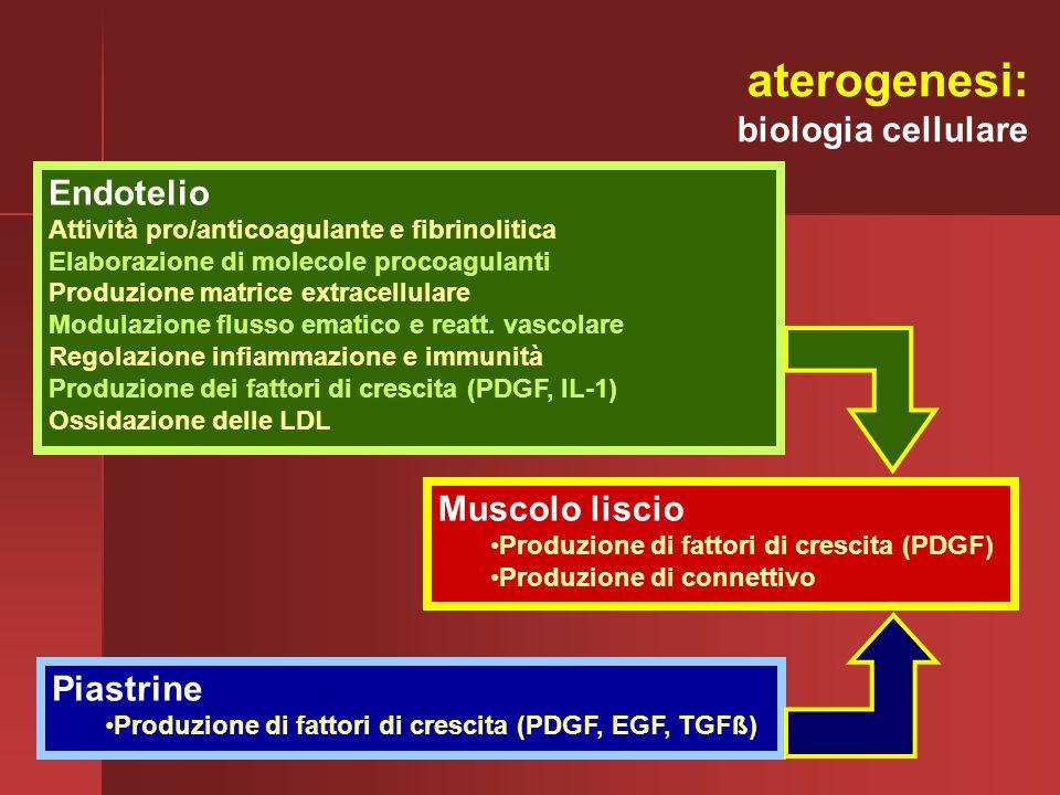 Muscolo liscio Produzione di fattori di crescita (PDGF) Produzione di connettivo Piastrine Produzione di fattori di crescita (PDGF, EGF, TGFß) Endotel