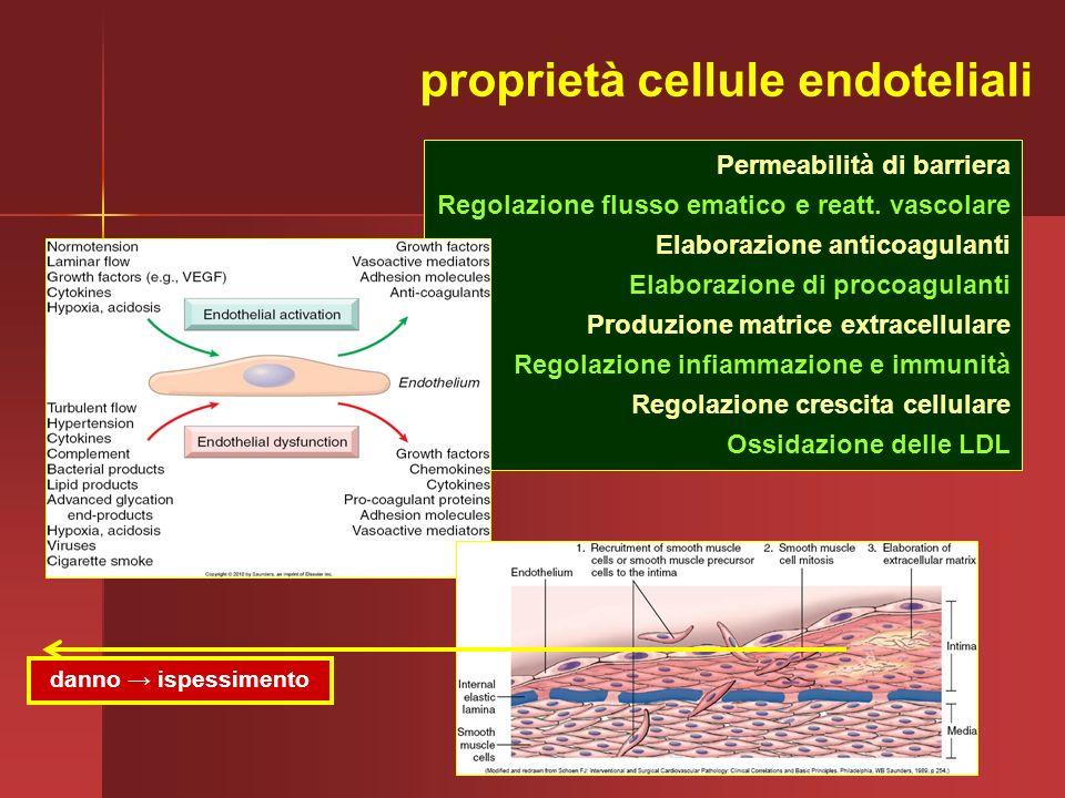 Permeabilità di barriera Regolazione flusso ematico e reatt. vascolare Elaborazione anticoagulanti Elaborazione di procoagulanti Produzione matrice ex