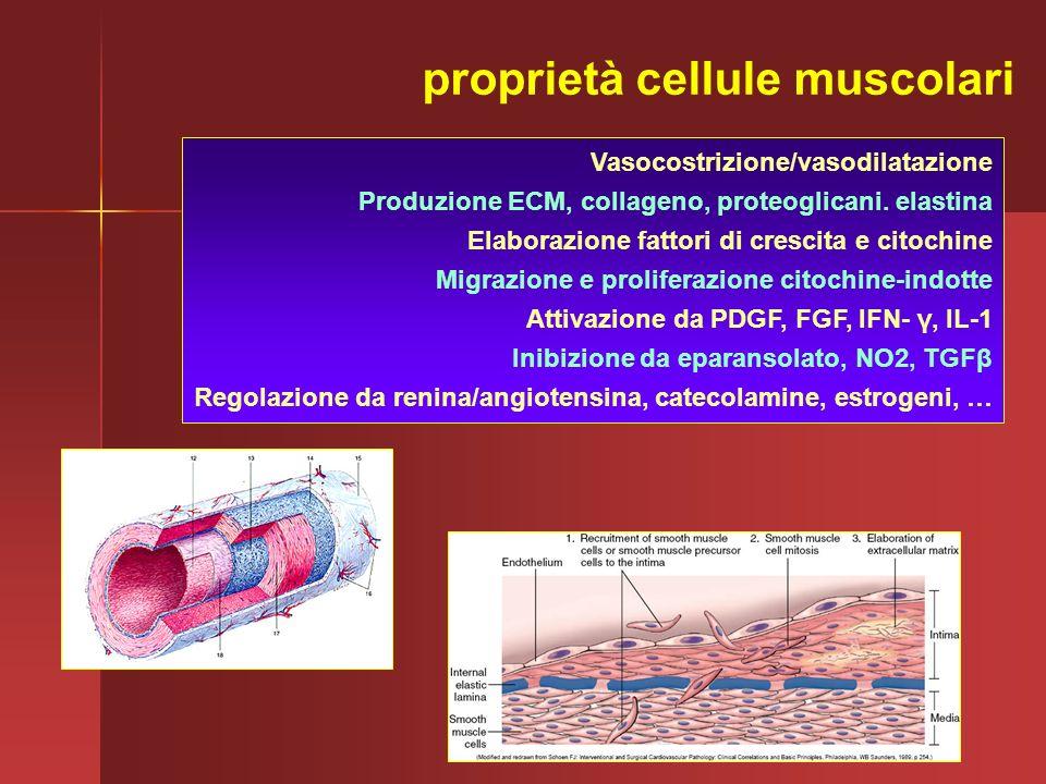 Vasocostrizione/vasodilatazione Produzione ECM, collageno, proteoglicani. elastina Elaborazione fattori di crescita e citochine Migrazione e prolifera