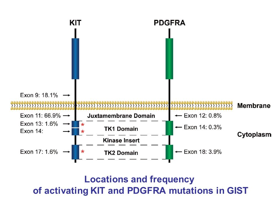 Locations and frequency of activating KIT and PDGFRA mutations in GIST