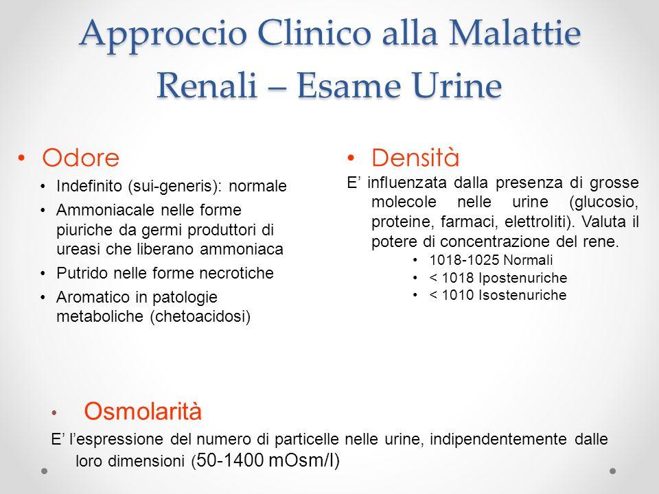 Approccio Clinico alla Malattie Renali – Esame Urine Odore Indefinito (sui-generis): normale Ammoniacale nelle forme piuriche da germi produttori di u