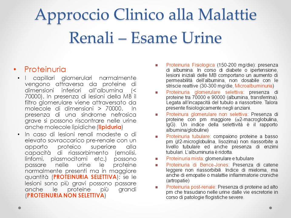 Approccio Clinico alla Malattie Renali – Esame Urine Proteinuria I capillari glomerulari normalmente vengono attraversa da proteine di dimensioni infe