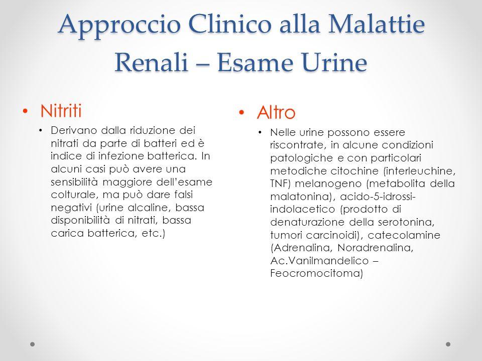Approccio Clinico alla Malattie Renali – Esame Urine Nitriti Derivano dalla riduzione dei nitrati da parte di batteri ed è indice di infezione batteri