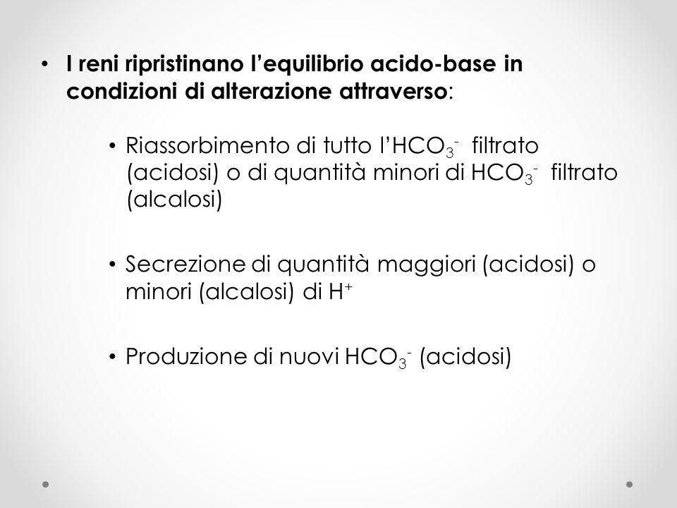 I reni ripristinano lequilibrio acido-base in condizioni di alterazione attraverso : Riassorbimento di tutto lHCO 3 - filtrato (acidosi) o di quantità
