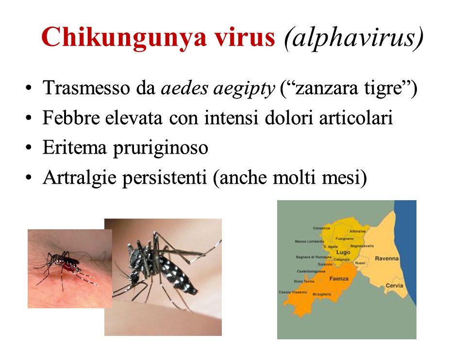 Chikungunya virus (alphavirus) Trasmesso da aedes aegipty (zanzara tigre) Febbre elevata con intensi dolori articolari Eritema pruriginoso Artralgie p