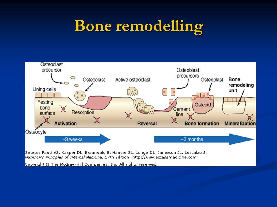 Bone remodelling