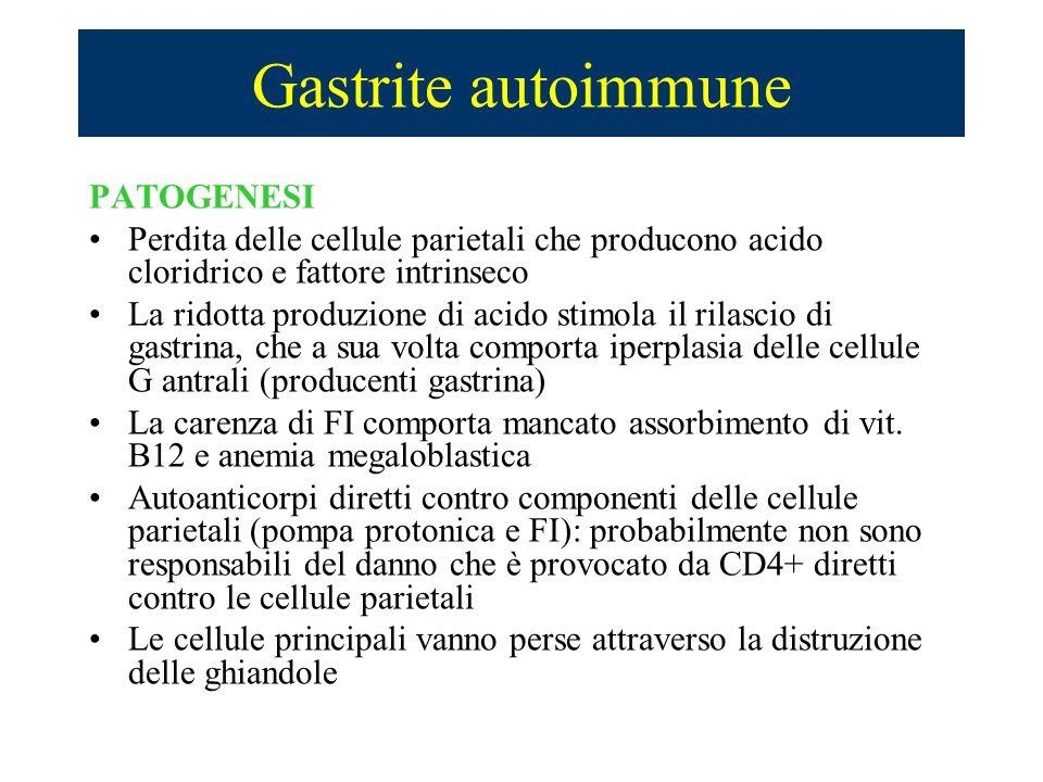 Gastrite autoimmune PATOGENESI Perdita delle cellule parietali che producono acido cloridrico e fattore intrinseco La ridotta produzione di acido stim