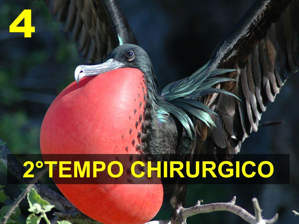 2°TEMPO CHIRURGICO